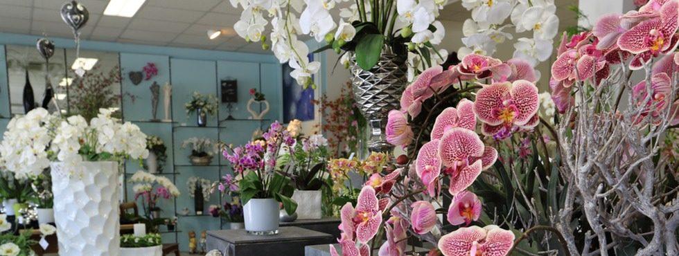 orchidee wettingen